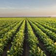Le SIET est heureux de participer au Varenne agricole de l'eau et du changement climatique, en collaboration avecl'UIE,afin d'apporter son expertise sur la réutilisation des eaux usées traitées pour irriguer […]